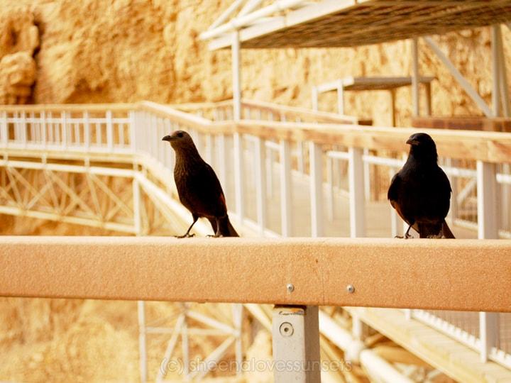 Masada 8 SheenaLovesSunsets