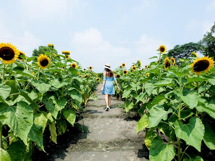 Taiwan Zhong She Flower 7 SheenaLovesSunsets.com-min